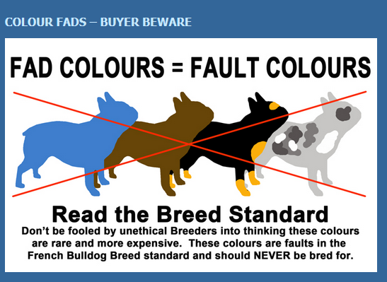 French Bulldog Fad Colours