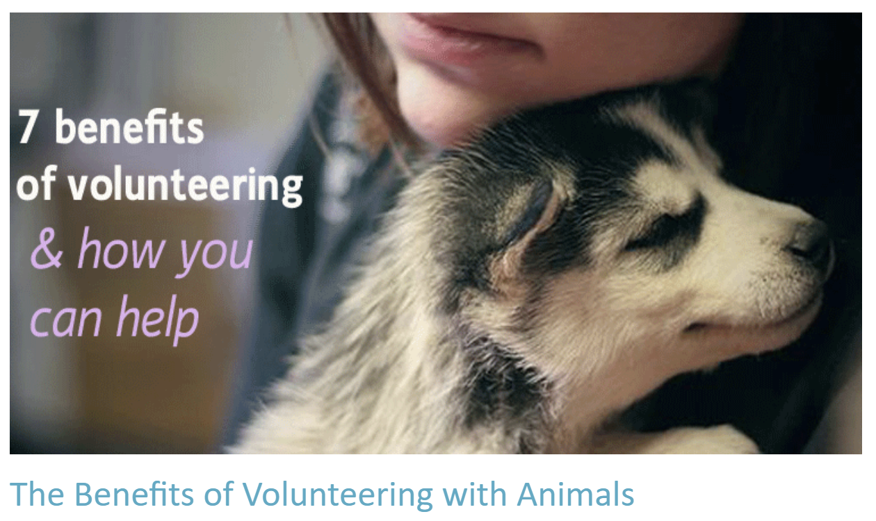 The Benefits of Volunteering with Animals