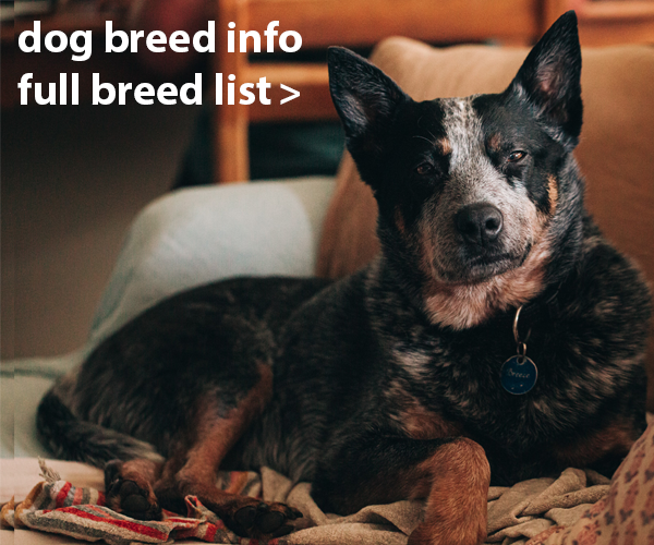 Dog Breed List A-Z, Breed Information, ANKC Breeder list