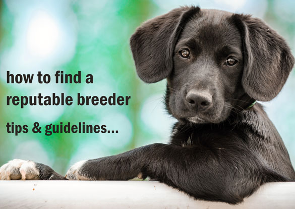 How to find a reputable breeder - tips and guidelines