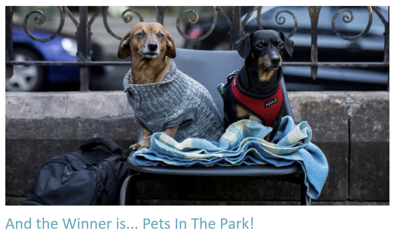 Pets in the Park - the winners!
