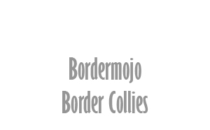 Bordermojo Border Collies