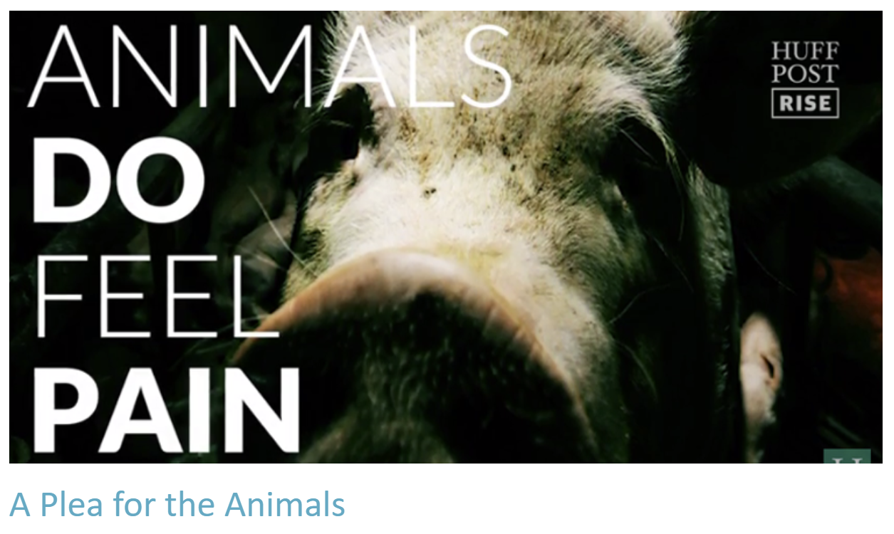 Animals Do Feel Pain