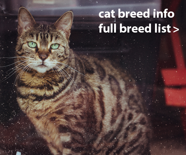 Cat Breed List A-Z, Breed Information, Registered Cat Breeders