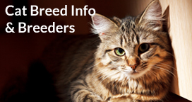 Cat Breeds, Breed Information & Cat Breeders
