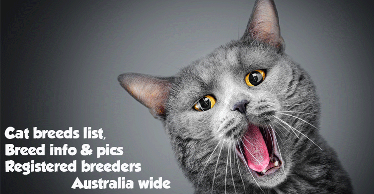 Popular Australian Cat Breeds