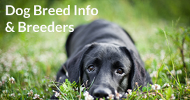 dog breed information & dog breeders