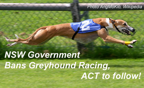 Greyhound Racing Banned in NSW and ACT