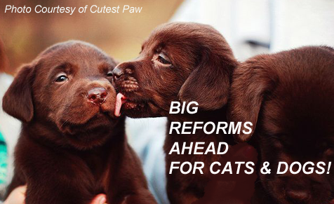 Big Reforms for Cats and Dogs!