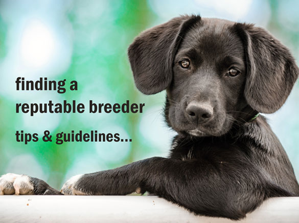 Finding a reputable breeder - tips & guidelines