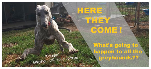 Greyhound Racing Ban - What will Happen to the Greyhounds
