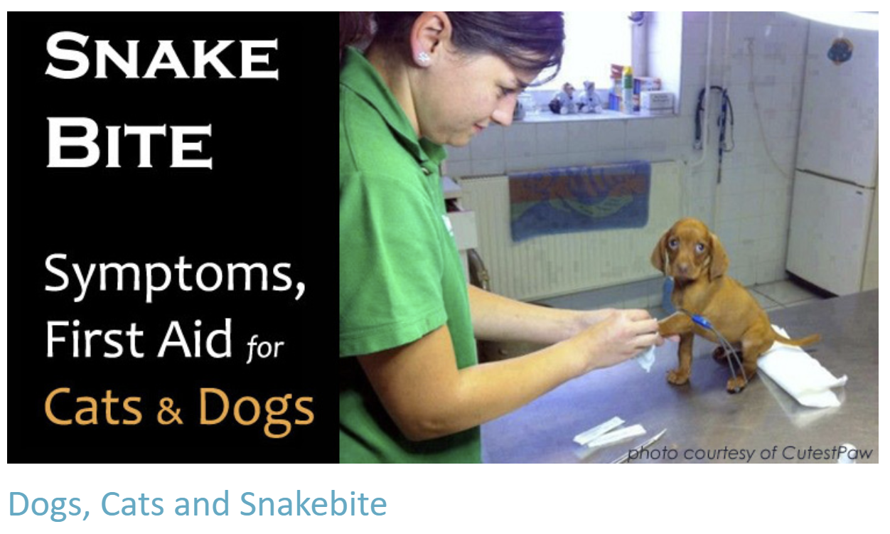 Dogs, Cats & Snake Bite - Treatment & Advice